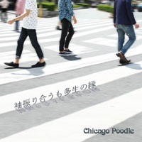 Chicago Poodle | 袖振り合うも多生の縁